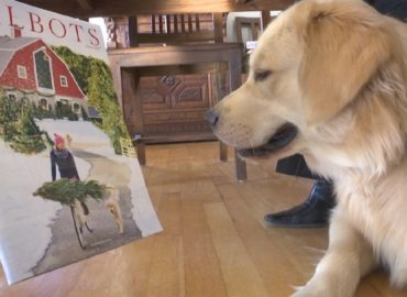 Loveland amputee dog featured in new documentary