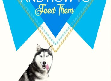 Best Dog Food – Detailed Info And Advice