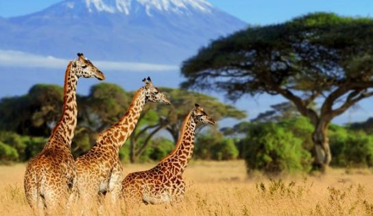 Planning Exciting African Safari Tours